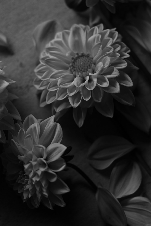 dahlia_blackwhite.jpg