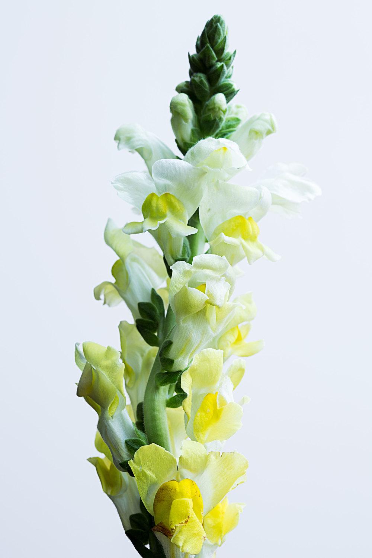 flower_v1.jpg