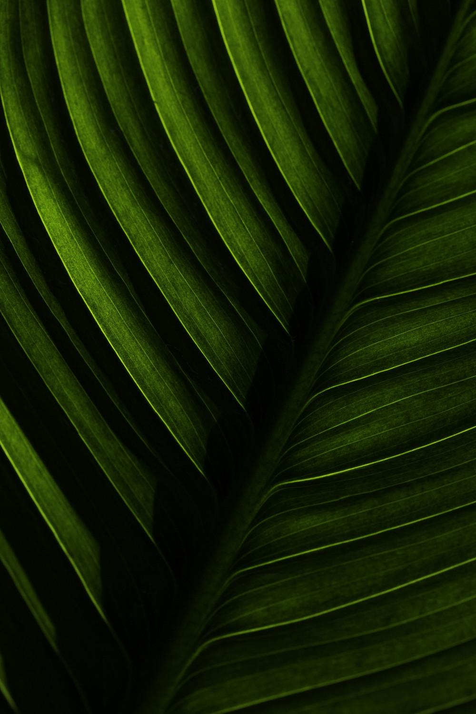 lily_leafv1.jpg