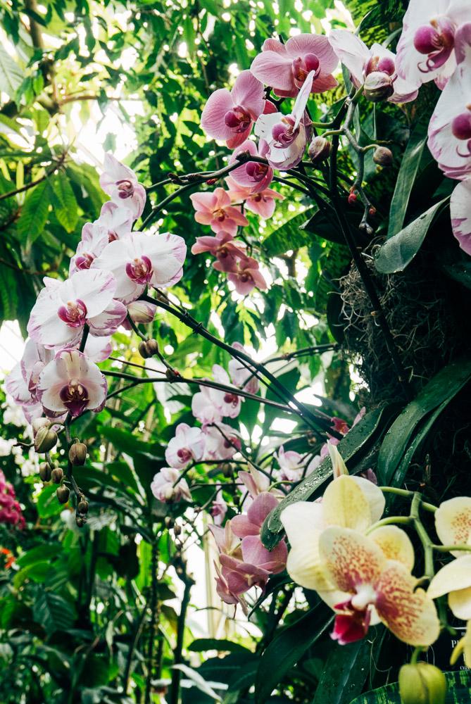 New YorkBotanic Garden - Orchid Show