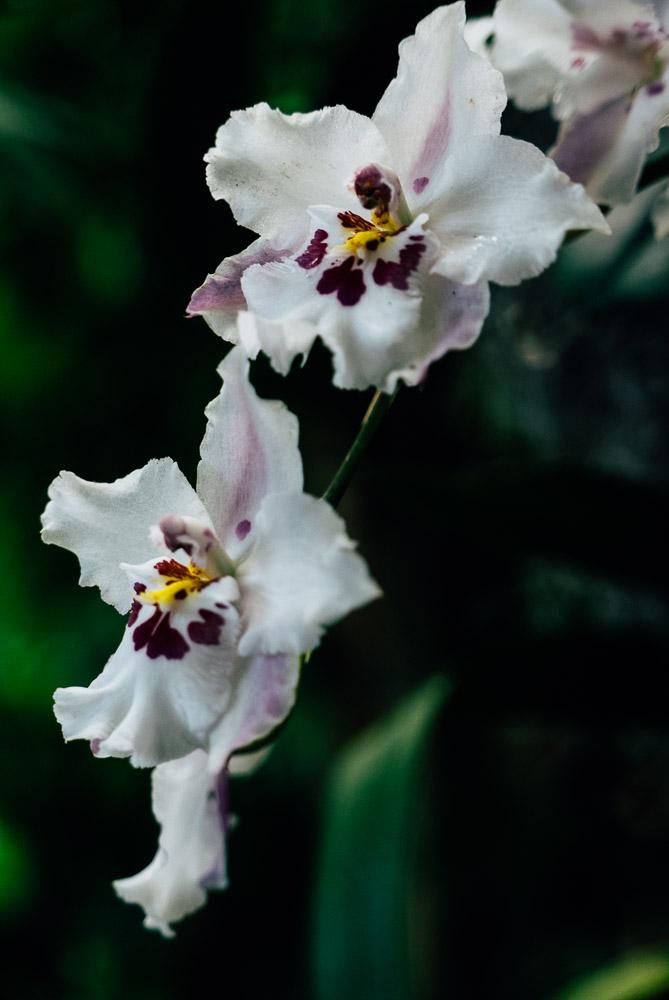 orchidshow-2.jpg
