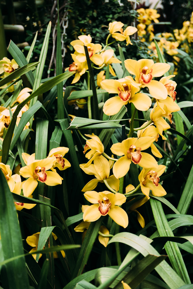 orchidshow-17.jpg