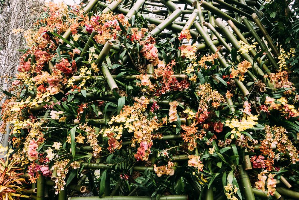 orchidshow-15.jpg