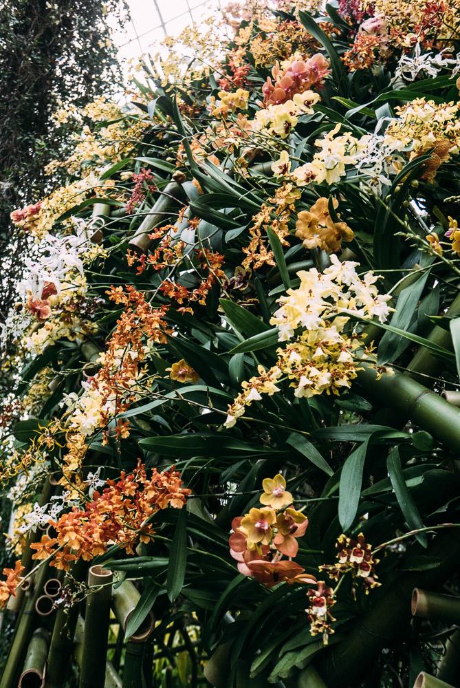 orchidshow-19.jpg