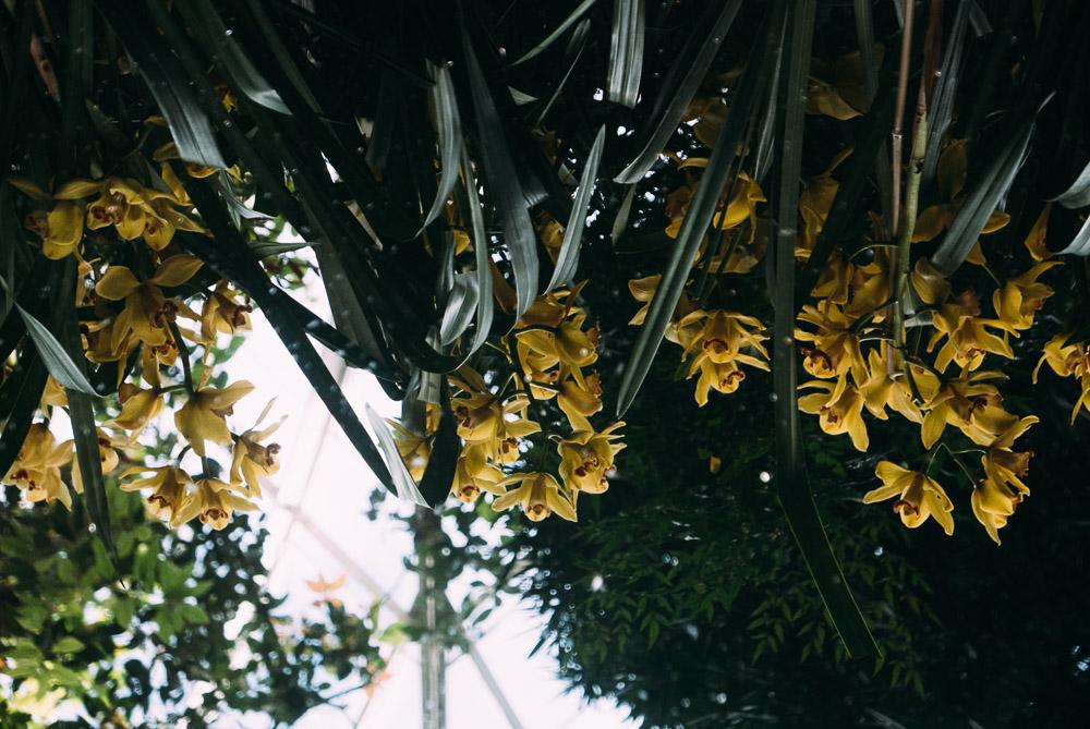 orchidshow-18.jpg