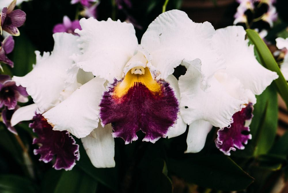orchidshow-13.jpg
