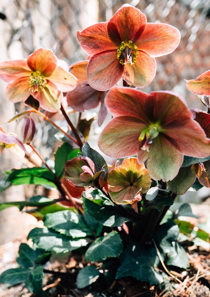 spring18_-8.jpg