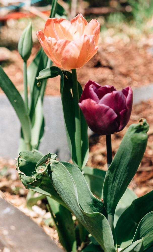 spring18_-11.jpg