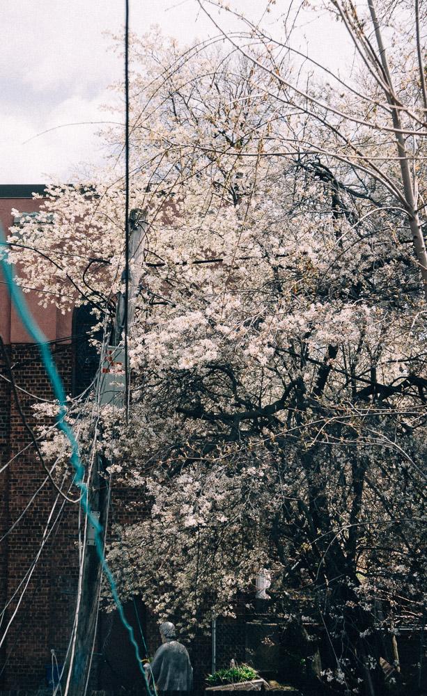 spring18_-17.jpg