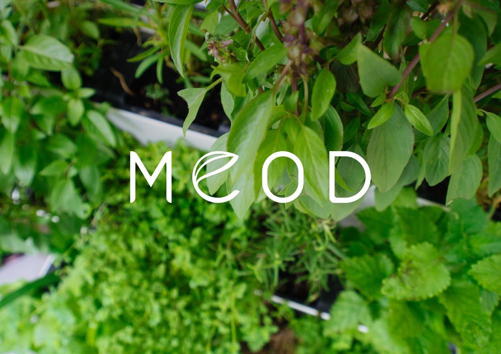 MEOD-02.jpg