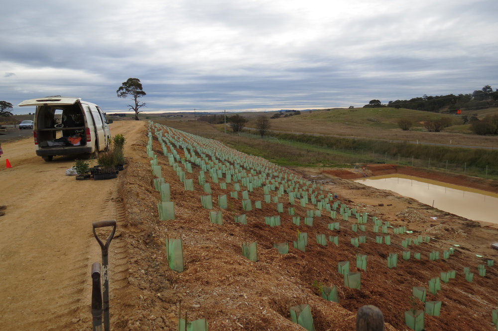 Over the past 22 years we have done many revegetation and forestry projects, ranging from one hundred plants to one million. We have done complete programs for many projects, from seed collecting, growing, site preparation, planting and maintenance.