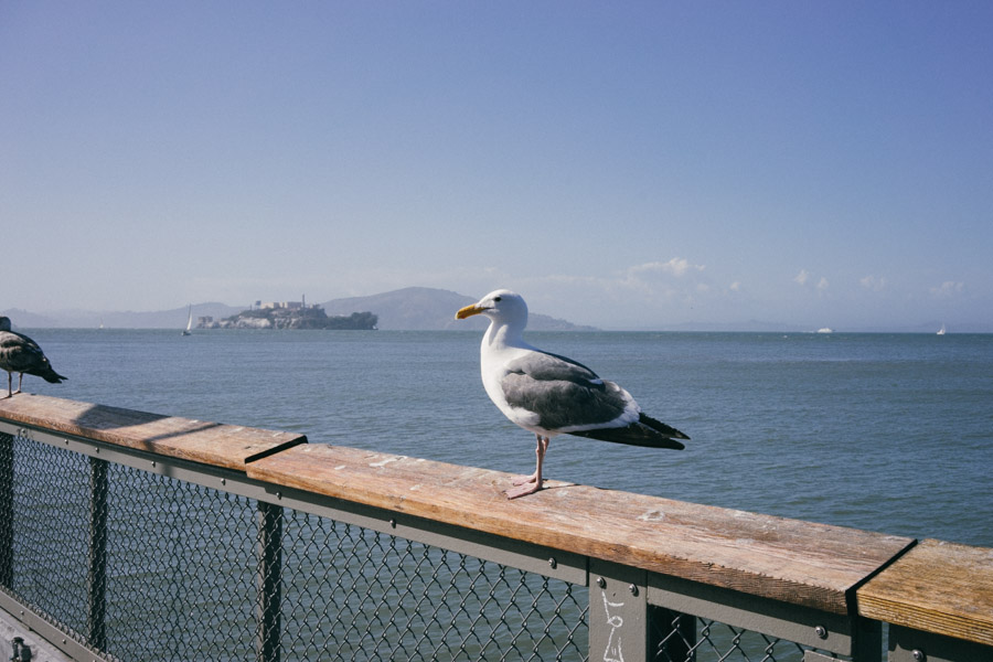 Seagull chilling at Fisherman's Wharf | www.MadeinMoments.com