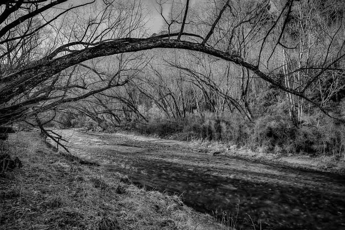 A black and white photo made on a lovely winters day along the tree-lined creek in Arrowtown on the South Island of New Zealand