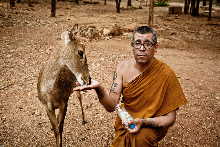 Western Buddhist monk feeding young deer in open zoo in Thailand