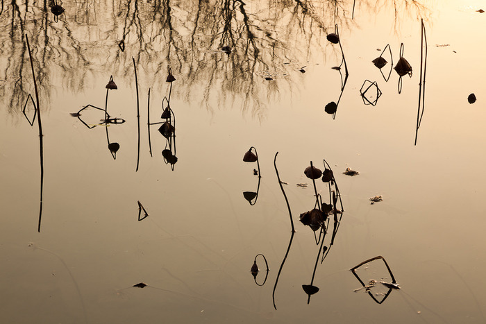 Reflection of reeds in water at Hongcun, a classic village in eastern China