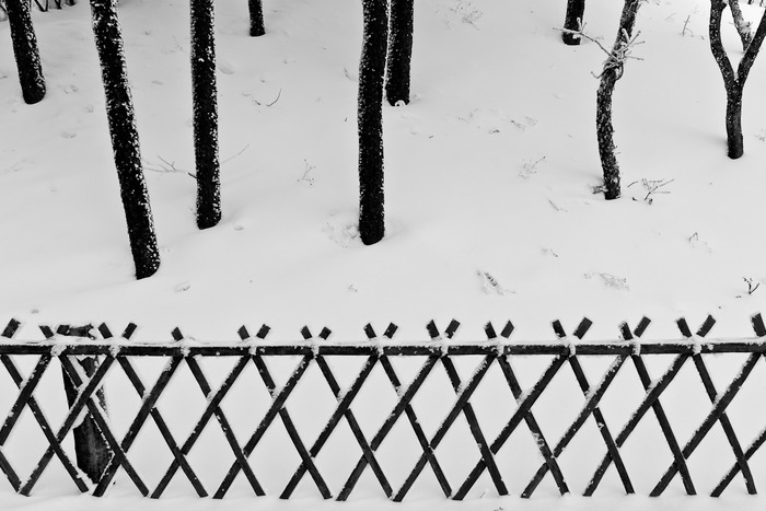 Minimilist black and white photo of trees and fence on Huangshan or Yellow Mountain, China