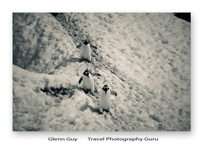 Three penguins I refer to as Larry, Curly and Moe at Port Lockroy, Antarctica