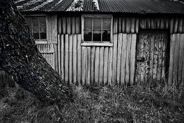 oldshedandtreeharcourtvictoriaaustralia.jpg