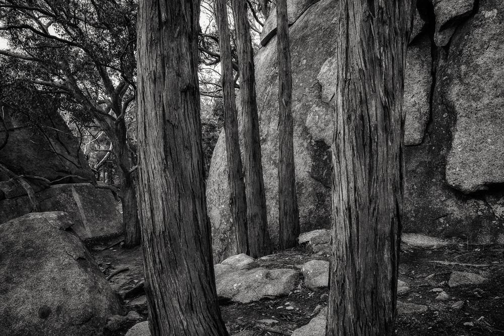Trees, Dog Rocks, Mount Alexander