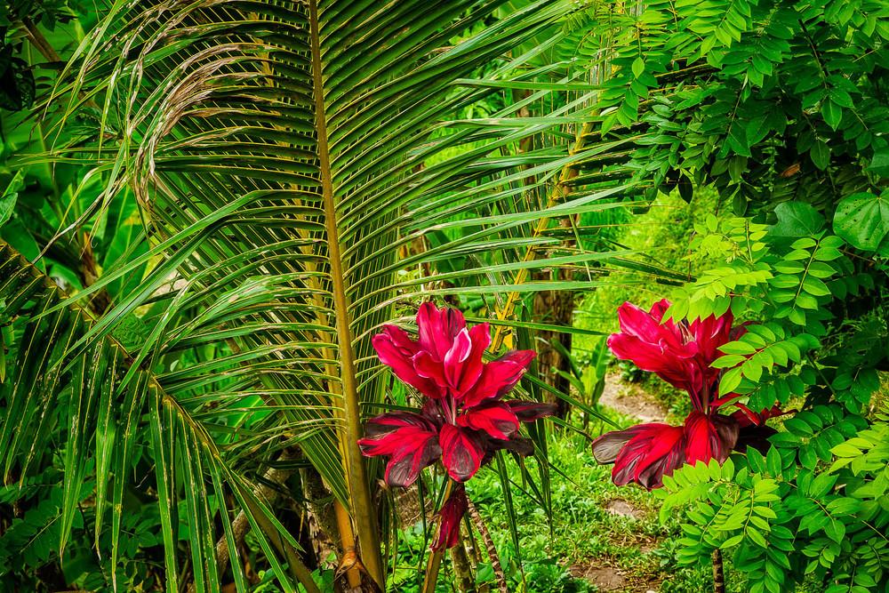 Wildflowers, Bali, Indonesia