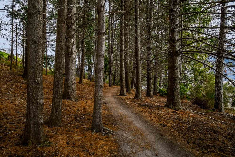 Path through the Pines, Queenstown, New Zealand