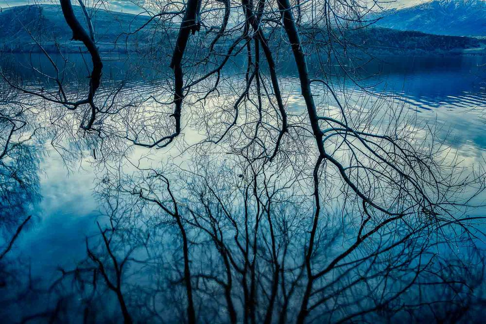 Tree Reflections, Lake Hayes, New Zealand