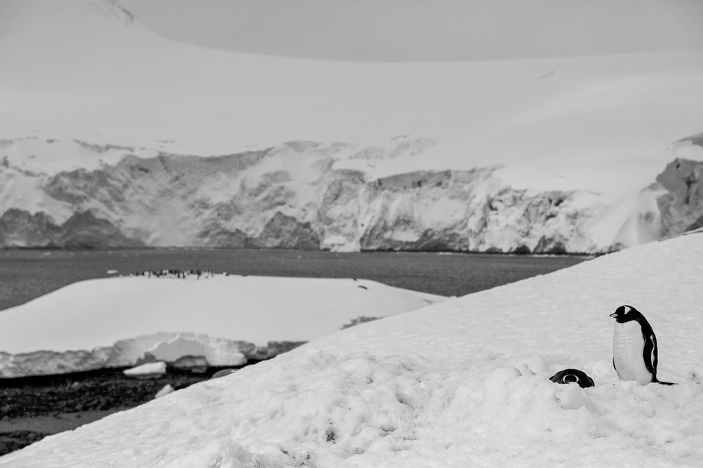 Penguins, Port Lockroy, Antarctica