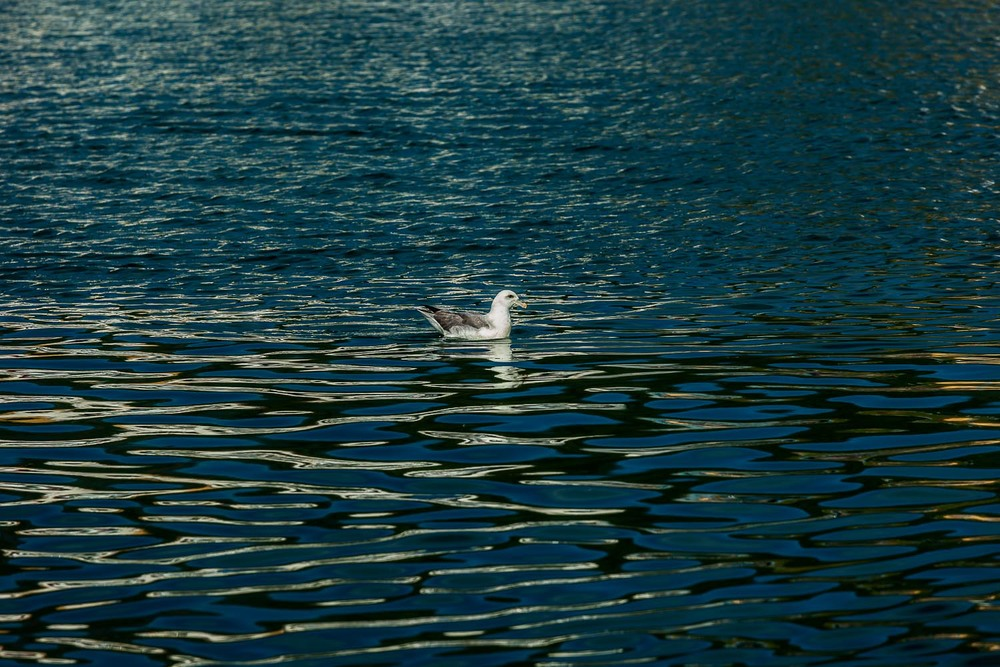 Seagull and Patterns on Water, Huskavik, Iceland