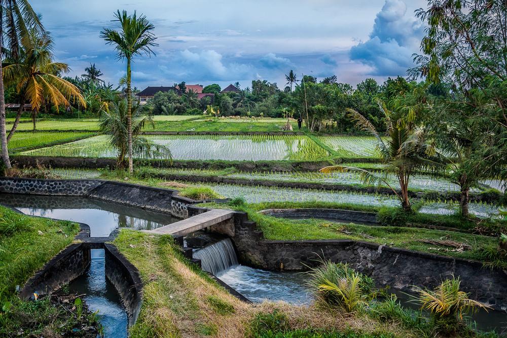 Irrigation, Bali, Indonesia