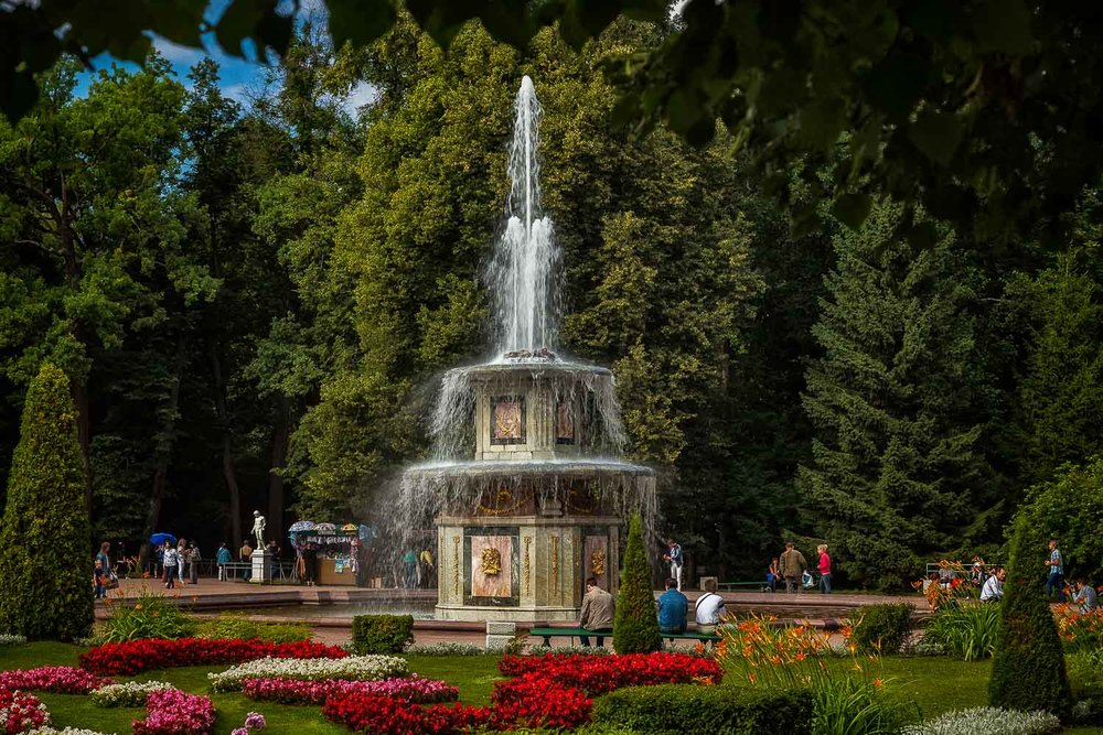 A lovely    fountain   , surrounded by trees in the grounds of    Peterhof Summer Palace   ,    St. Petersburg, Russia