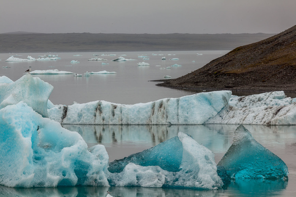 Large, colorful icebergs have come together to form great walls of ice at  Jokulsarlon Glacier Lagoon in Iceland .