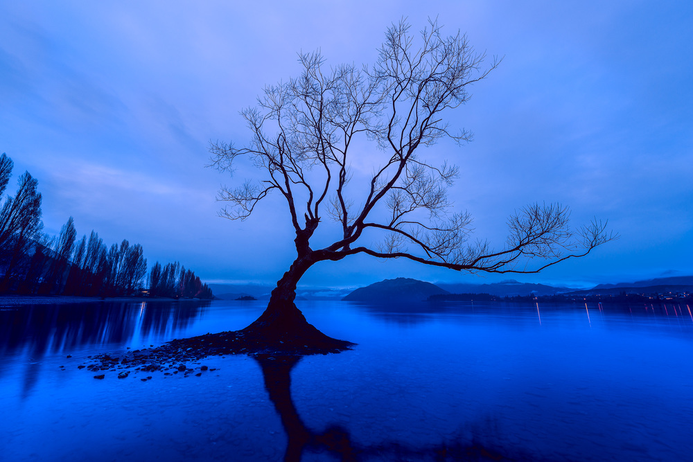 A brooding image of a lonely tree, on a winter's day on Lake Wanaka in the town of Wanaka, New Zealand.