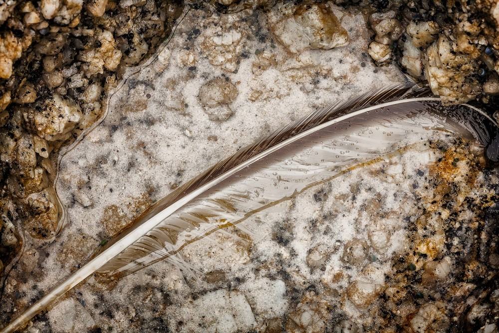 A feather, delicately positioned between rocks, lies in a shallow pool of water on Squeaky Beach in Wilsons Promontory National Park, Australia.
