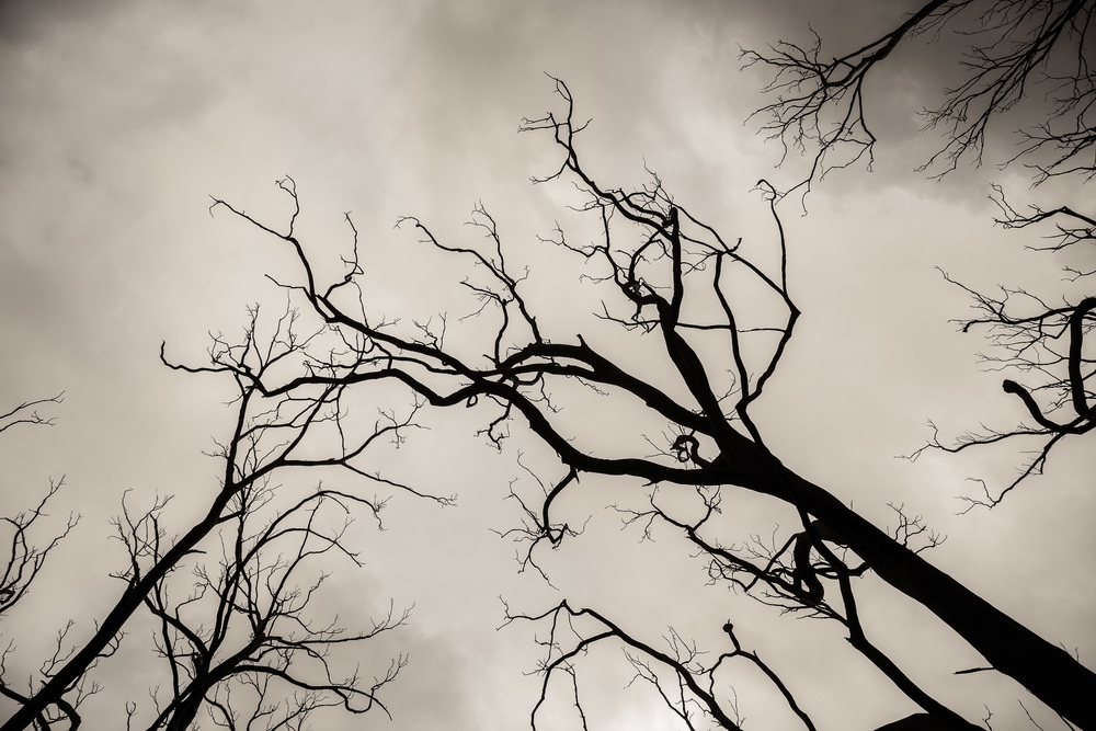 Burnt trees silhouetted against a bleak sky in fire-ravaged Victoria, Australia.