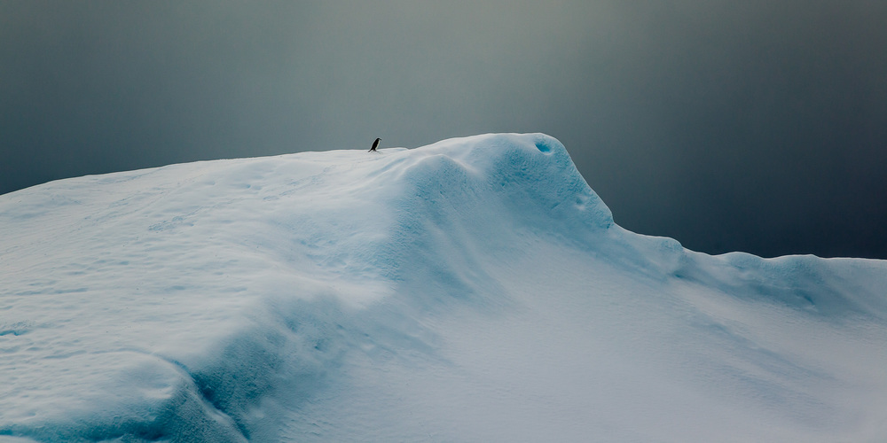 A penguin climbs to the top of an ice covered hillside on Cuverville Island, Antarctica.