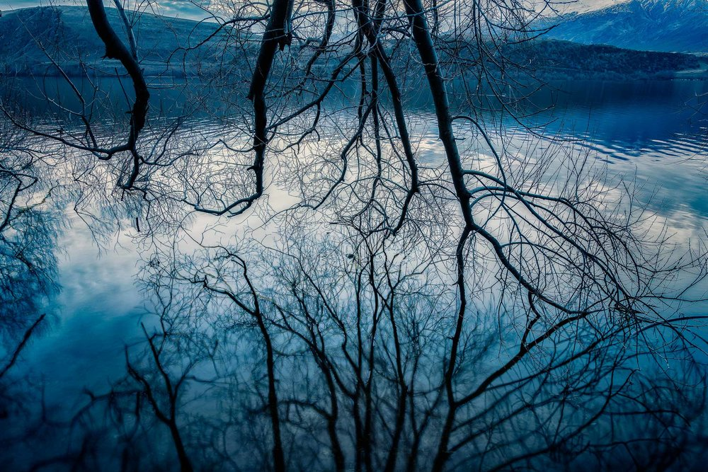 Tree branches at twilight reflected in the waters of Lake Hayes near Arrowtown, New Zealand.