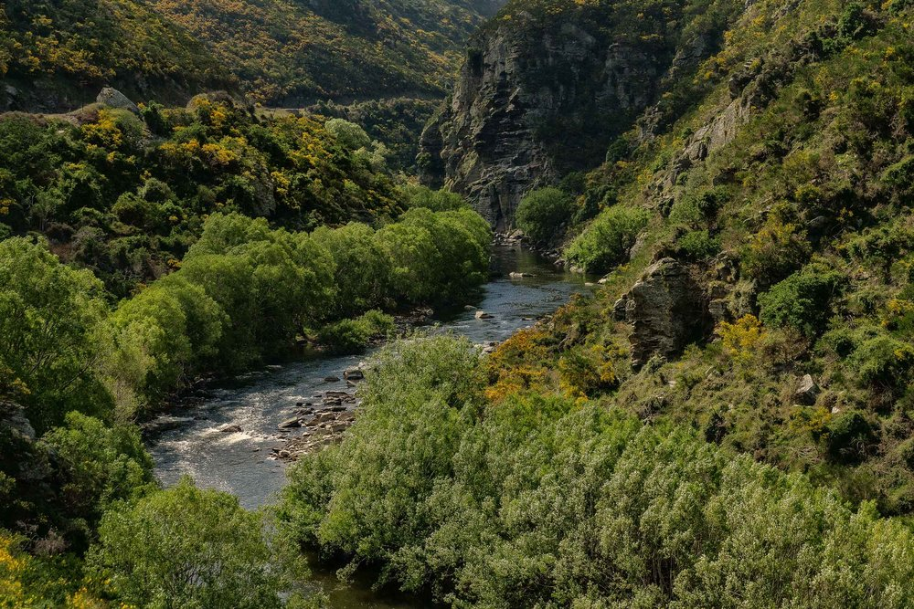 A beautifully tranquil scene of a river flowing through a lush, rocky gorge along the    Taieri Gorge Railway Line    near    Dunedin    in    New Zealand   .
