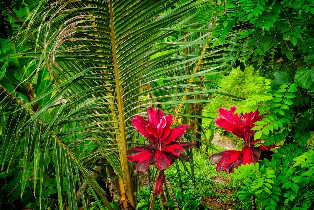 Huge wildflowers in a lush green forest on the island of Bali, Indonesia.