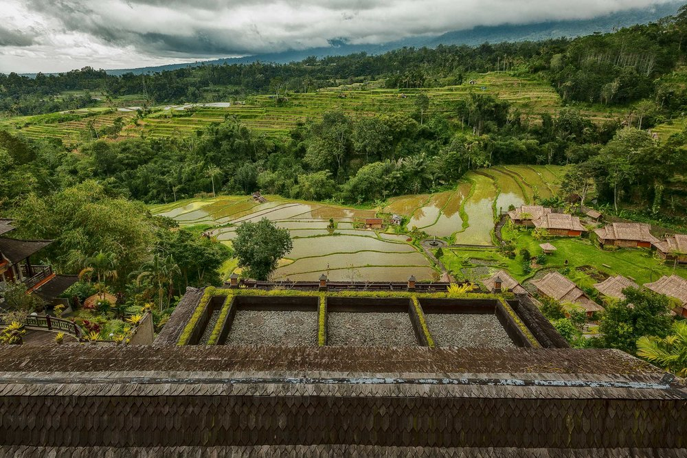 Looking out over  vibrant forests and terraced paddy fields  from a hotel overlook in  Bali, Indonesia .