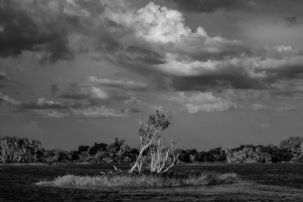 A small group of    trees on a tiny island    on the    Yellow Waters Billabong    in    Kakadu National Park, Australia   .