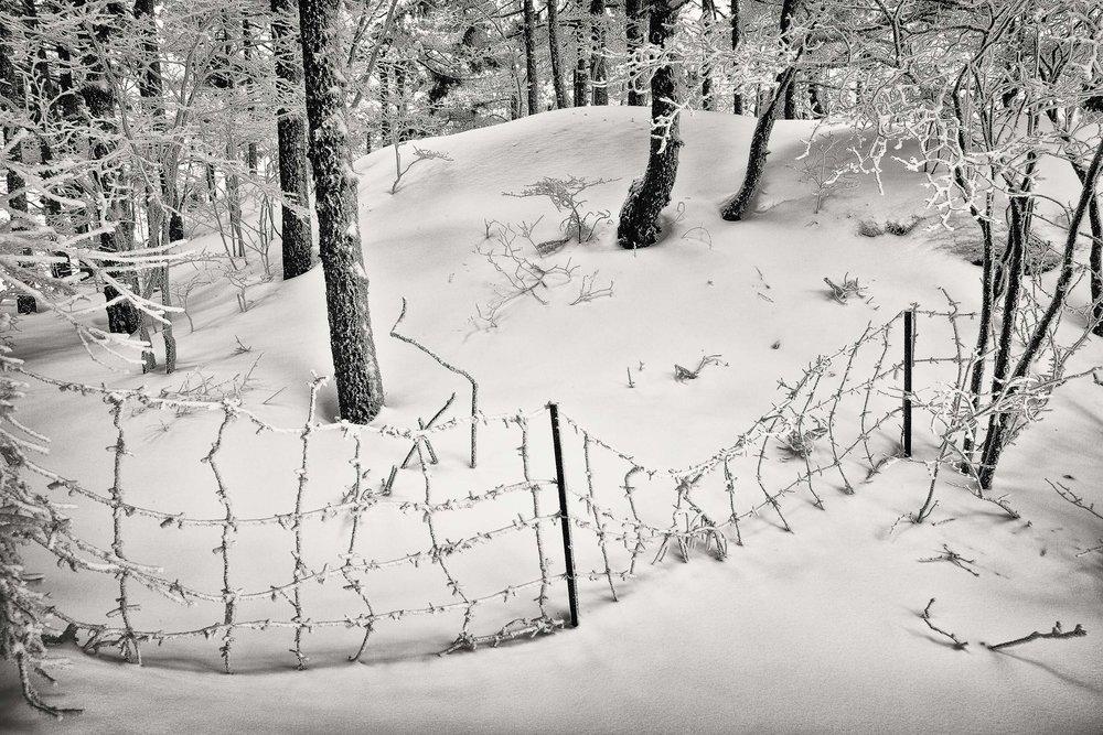 A wire fence, covered in ice, on a quiet hillside on Huangshan (i.e., Yellow Mountain), China.