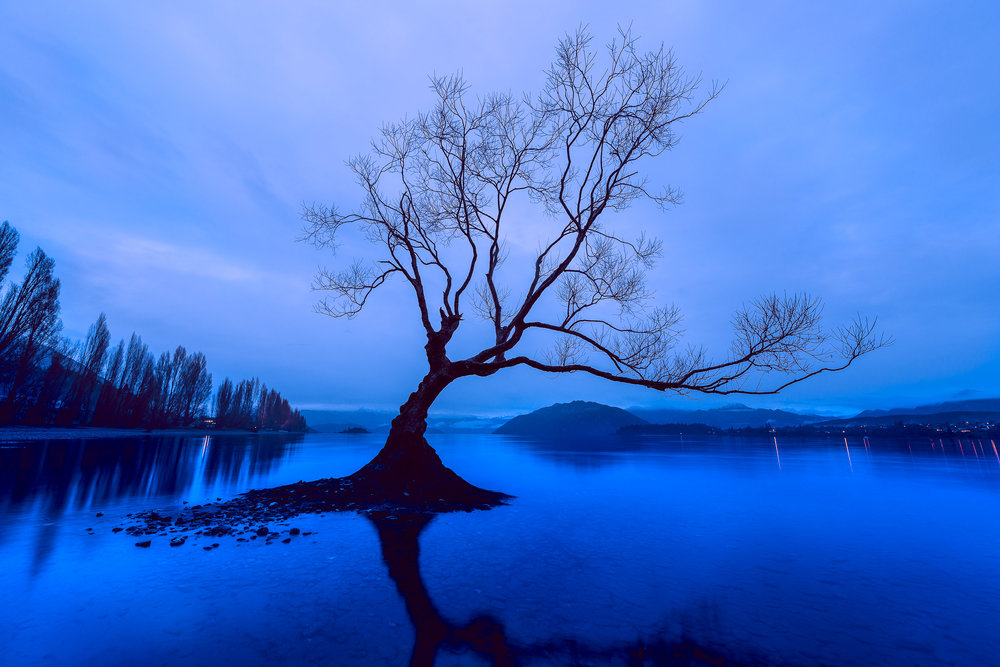 A brooding image of a lonely tree, on a winter's day, on Lake Wanaka in the town of Wanaka, New Zealand.