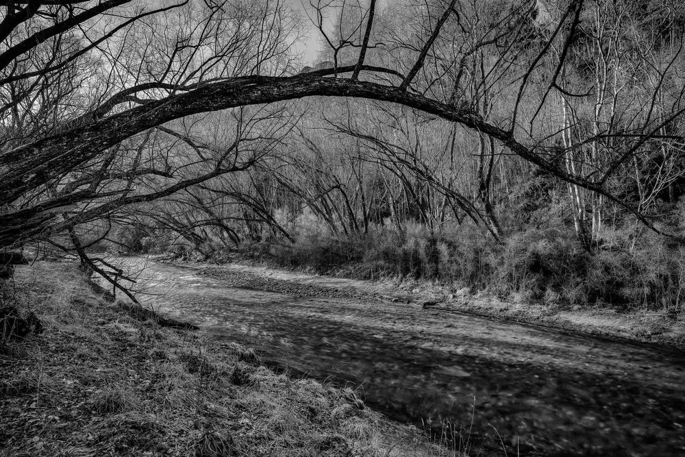 Low lying tree branches frame the Arrow River on a winter's day in Arrowtown, New Zealand.