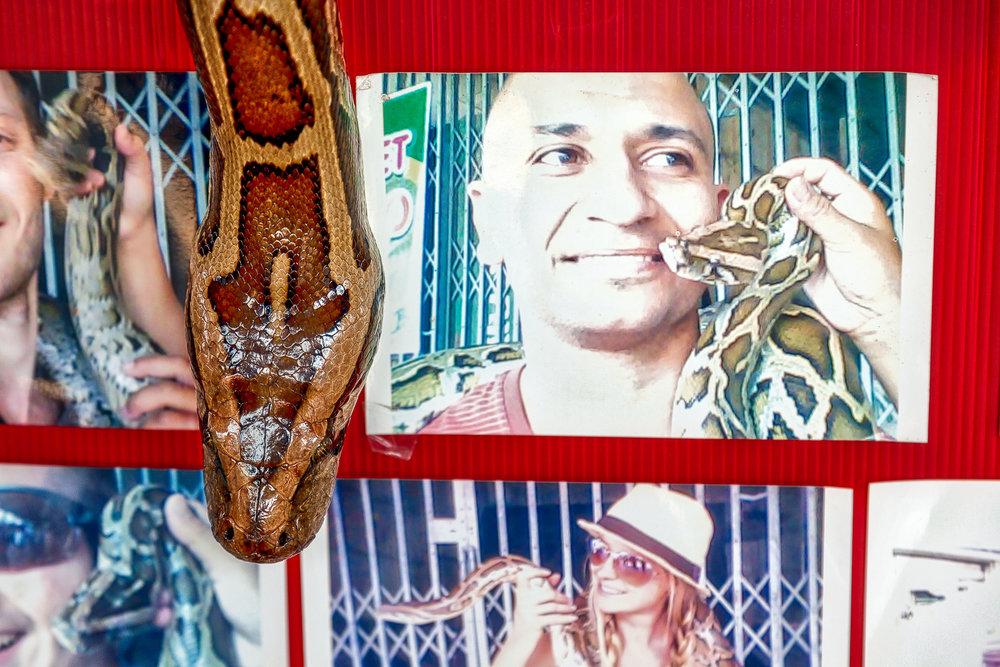 A close up of a snake with photographs at the Floating Markets near Bangkok, Thailand.