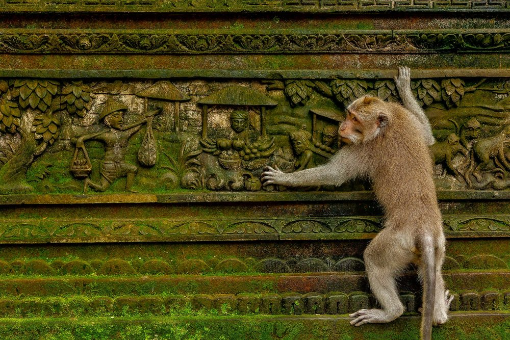 A monkey climbs up a carved wall, featuring scenes of traditional village life, in the Monkey Forest in Ubud, Bali.
