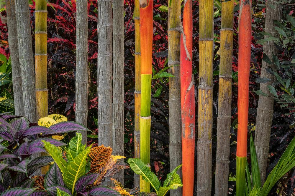 Bamboo, Darwin, Australia