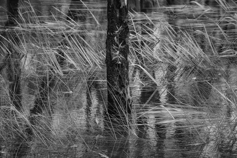 Kakadu Fragility