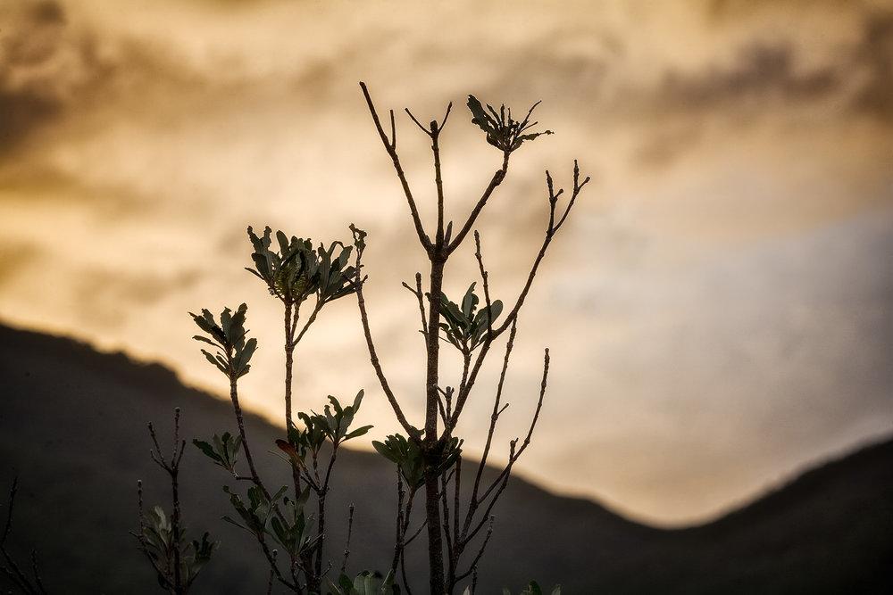 Sunrise, Wilsons Promontory, Australia