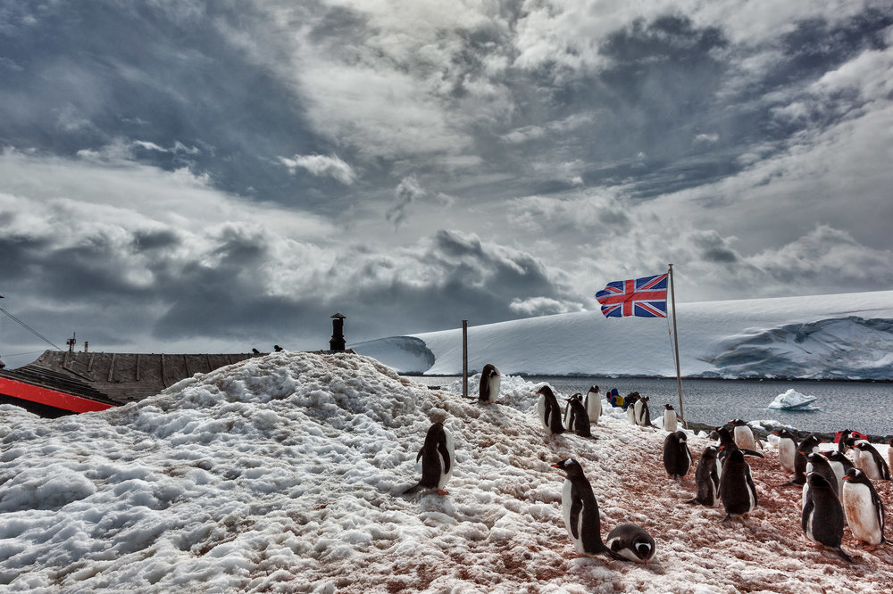 Penguins  gathering around  British flag , against a  stormy sky ,  Port Lockroy, Antarctica .