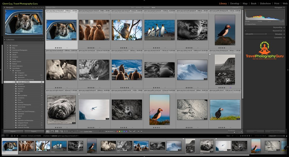 The  grid  interface within the  Library  module inside  Lightroom . Notice the  star ratings  below each of the thumbnails. If you look extra hard you may also see that the image of the seagull in flight has been  flagged  with a tiny white flag in the top left corner of the thumbnail. You might also notice that the photo of the sheep grazing has a tiny  purple  colored square to the right of the stars along the bottom edge of that thumbnail.